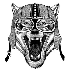 Wolf, dog Wild animal wearing motorcycle, aero helmet. Biker illustration for t-shirt, posters, prints.