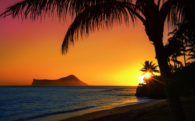 Wall Mural - Sunset in Oahu with ocean and palm trees