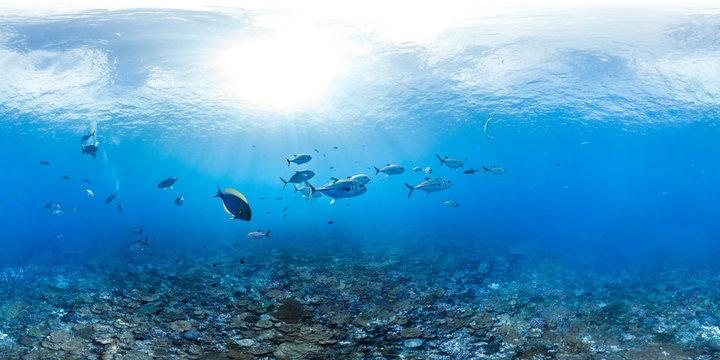 Panorama Coral Reef Underwater Photo of Trevally Fish School in Australia