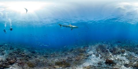 360 of shark swimming in Palmyra