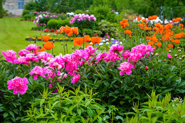 Fuchsia blossom peonies and red anemones. Luxury european garden. Floral composition, stylish garden design. Grass, lawn, bushes, flowers, trees. Seasonal colorful photo for nature calendar, print