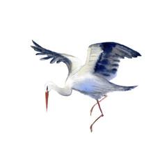 Stork in flight . Newborn picture. Watercolor hand drawn illustration.White background.