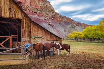Boy with horses at the historic barn in the Capitol Reef National Park, Utah
