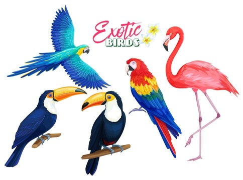 Exotic birds, cartoon style