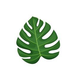 Tropical leaf monstera.