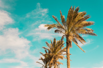 palm trees against turquoise clear sky summer