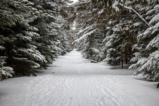 A snowy tunnel ski trail in the Adirondack Mountains.