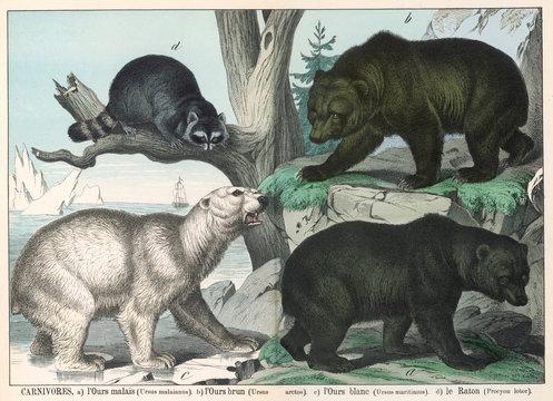 Various Types of Bear