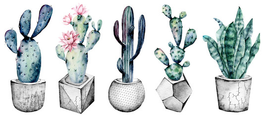 Cactus in pot, set watercolor floral illustrations, isolated on white background. Flowers perfectly for posters, greeting cards, stickers, icons. Green, grey, blue, pink colors.