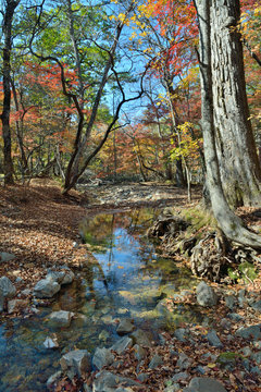 Autumn woodsy river 1