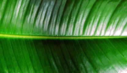 Tropical jungle leaf leaves Nature spring concept background.
