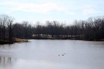 A view of the lake in the park on a sunny winter day.
