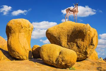 Oryx antelope in the Spitskoppe desert