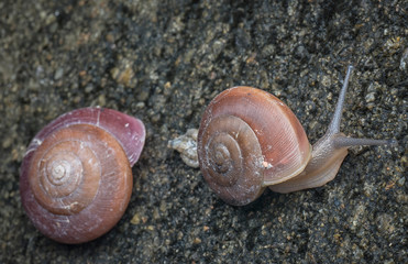 small round shell snail