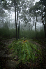 Fog forest nature green