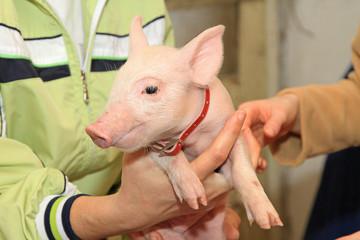 Holding Piglet