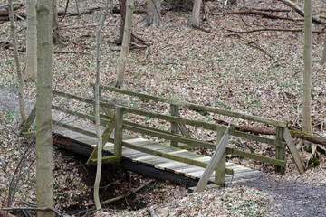 A view of the old wood bridge on the trail in the woods.