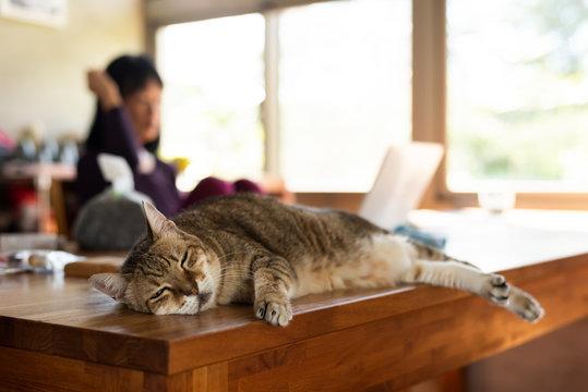 tabby cat sleep