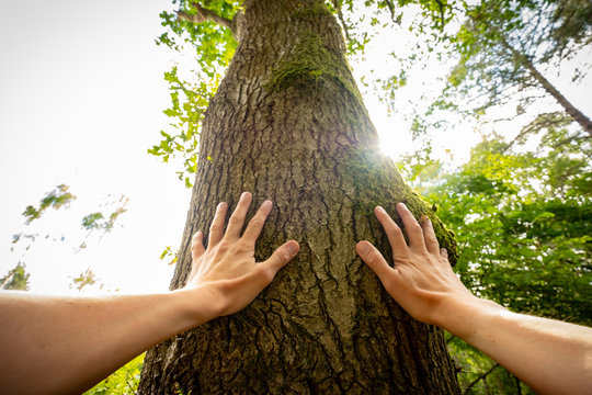 Personal perspective of a man touching a tree