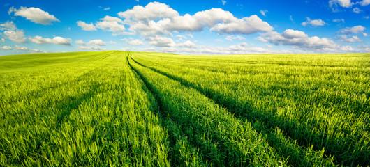 Vast green fields panorama with nice blue sky