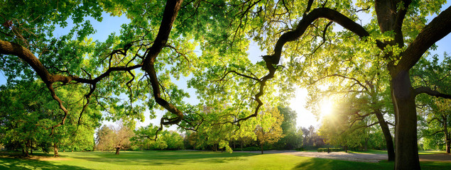 Poster Spring Tranquil panoramic scenery in a beautiful park