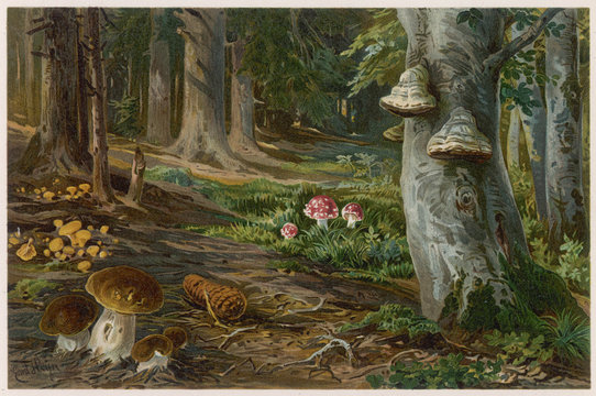 Mushrooms at Home 19c