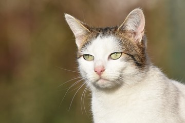 Portrait of the white young cat