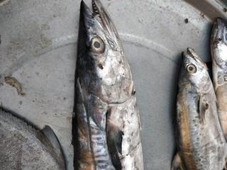 Seafood background food