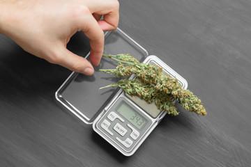A drug dealer weighs cannabis flower marijuana on a scales