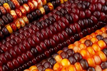 Ornamental corn closeup background