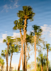 Abstract palm tree reflection in water on beach vacation