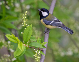 Bird great tit on a branch