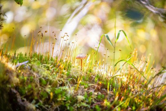 Mushrooms of Alaska