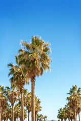 Palm trees on a warm Southern California day