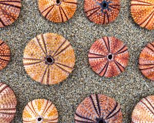 sea urchins shells on wet sand beach top view