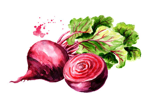 Fresh whole and half Beet root with green leaves. Watercolor hand drawn illustration  isolated on white background