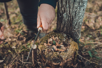A woman cuts a young tree with a knife for the inoculation of the fruit branch
