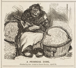 A Primrose DAme