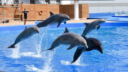Dolphins show in Valencia oceanografic