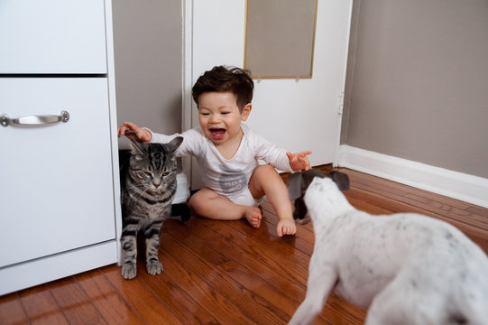 Boy playing with dog and cat at home