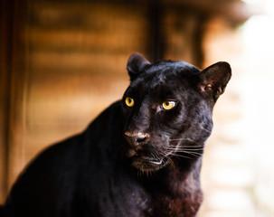 Deurstickers Panter Beautiful black Panther