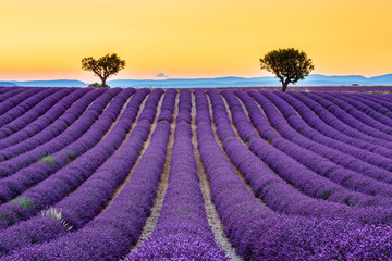 Provence, France. Valensole plateau at sunset.
