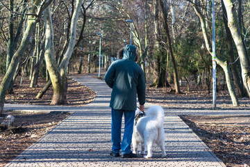 man with his dog walking in the park. Samoyed dog and his owner