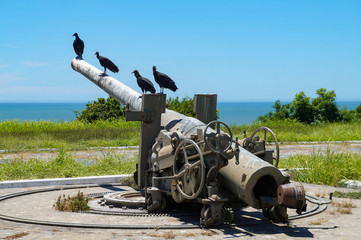 Old cannon pointed out to the sea with vulture, inside Marechal Hermes Fort, Macaé, Rio de Janeiro, Brazil Fototapete