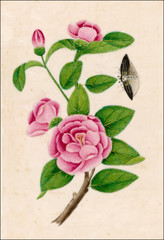 Camellia Insect