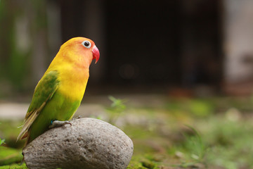 love birds are colorful and beautiful