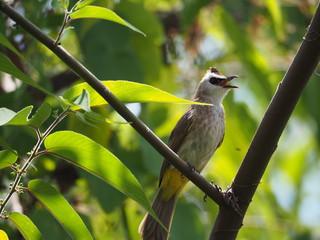 Beautiful bird. Close up bird on tree.