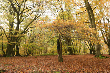 A landscape view of a Forest in the UK in autumn.