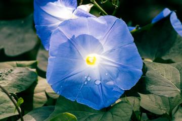 Beautiful Flower in Thailand Arboretum