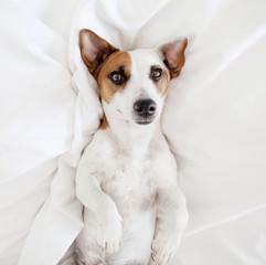 Dog at bed